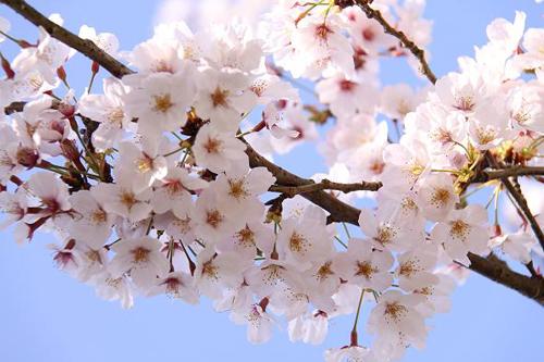 春だ!チントレを始めよう!